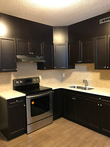 Beautiful and Brand New One Bed Room Luxury Basement Suite
