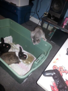 Two male bunnies to good homes