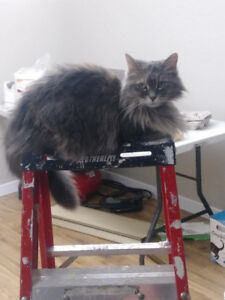FREE---Indoor & Outdoor CAT   (Pick up Bowmanville)