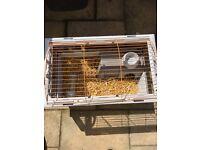 Rabbit/ Guinea Pig hutch cage