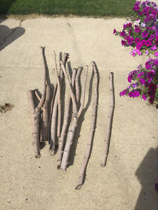 Maple Tree Logs / Branches