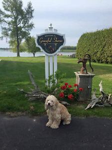 Lost dog in Morrisburg Cornwall Ontario image 1