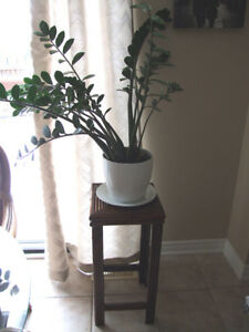Xtra Large House Plant with Table Stand, Very Nice