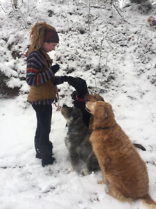 Professional Dog Walker- Wilderness Group Hikes & Pet Sitting