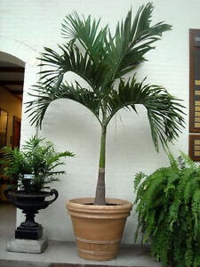 Palm Trees & Exotic Plants - Buy or Rent