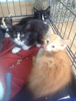 Rescue kittens with shots