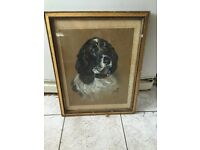 Vintage framed drawing of a Springer Spaniel
