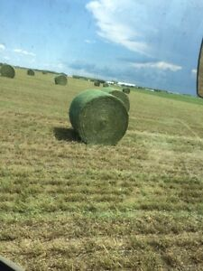 2016 SECOND CUT HAY