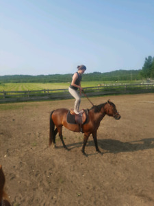 8 year old bay mare, well broke and ready for competition.