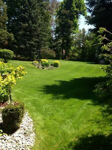 Fine Line ~ Lawn Care GRASS CUTTING from 50$ *Spring Clean Up*