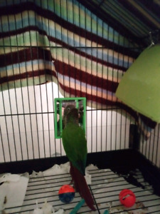 Conure 100 with cage