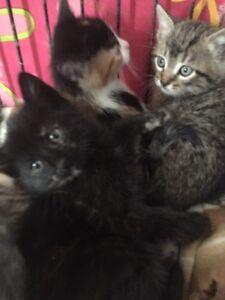 Me reste que la petit chatte noir un peut couleur