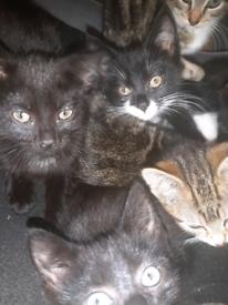 5 kitten