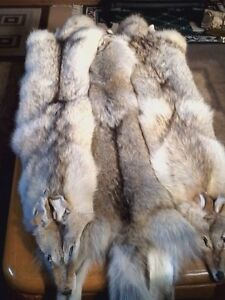 Tanned furs for sale Regina Regina Area image 6