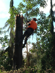 Tree Cutting, Branch Removal, Downsizing pruning in Toronto GTA!