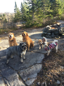 Professional Dog Walker-Group hikes, private walks, pet-sitting