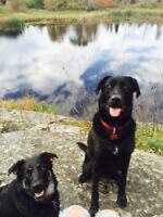 Volunteers for Dog Rescue (Transcona)