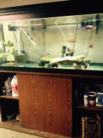 75g tank complete - $150