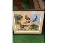 Limited edition framed Harris hawk picture