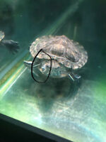 Help our turtle