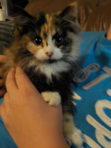 2 female kittens to give away