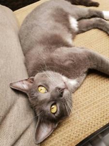 Beautiful natured cat giveaway