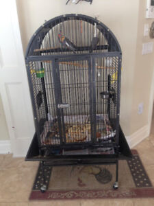 3 BEAUTIFUL COCKATIELS FOR SALE
