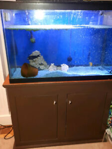 54 Gallon Aquarium with stand and filter