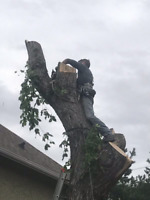 Offering removal of trees and brush