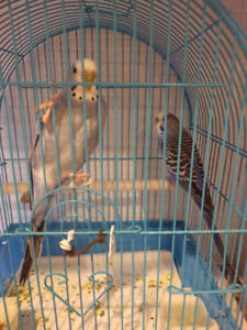 Tow Birds with Cage and food
