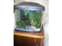 Fish tank with blue /white lights