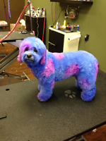 Part time Experienced Dog Groomer Needed