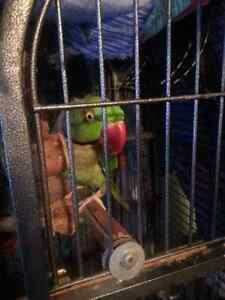 Alexandrian Parrot and Large Cage