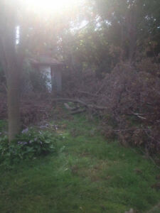 Tons of clean and free firewood for pickup London Ontario image 3