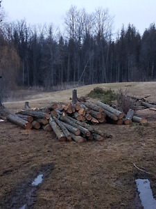 Eastern White Cedar logs .. make an offer. I need them gone.