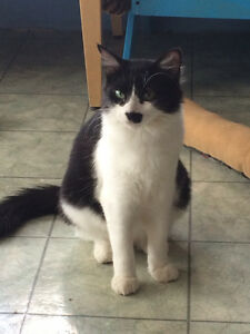 """Female young cat black and white """"CHELSEA"""" London Ontario image 5"""