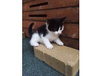 Kittens 2 (left)