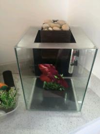 Fluval chi aquarium fish tank