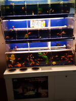 Pet Store Display Aquarium four feet by six foot high  times two