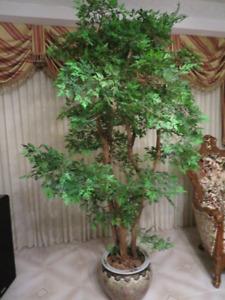 Une Plante BONSAI avec vase dissinés à la main pour 579$tre bel
