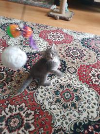 Kitten 😸 for sale
