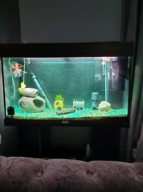 125l tropical Fish Tank and fish