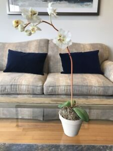 $5 and up flowers, vases and more décor