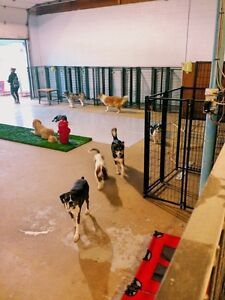 Dog Boarding! Dog Daycare! 6 MONTH PROMOTION!!!
