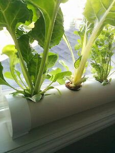 Hydroponic Window Garden Planter