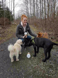 Experienced dog walker available for dog walking