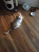 Male cat in need of a good home!