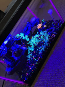NeoGlow 5.5 Gallon Fish Tank With Accessories