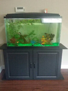 30 Gallon Display Tank w/stand fancy guppies inc.. $350