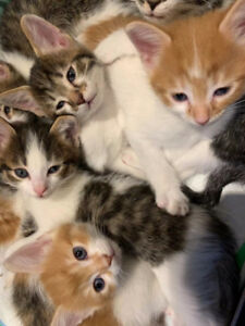 6 six-week-old kittens for rehoming